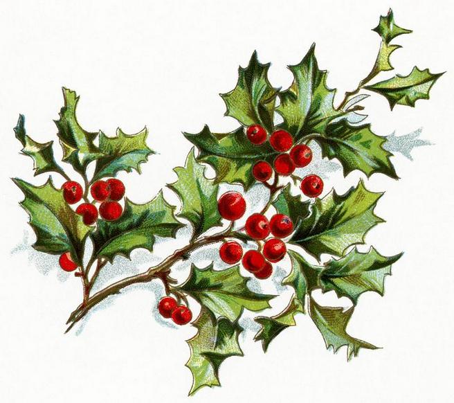 Christmas holly, NorthumbriaGems