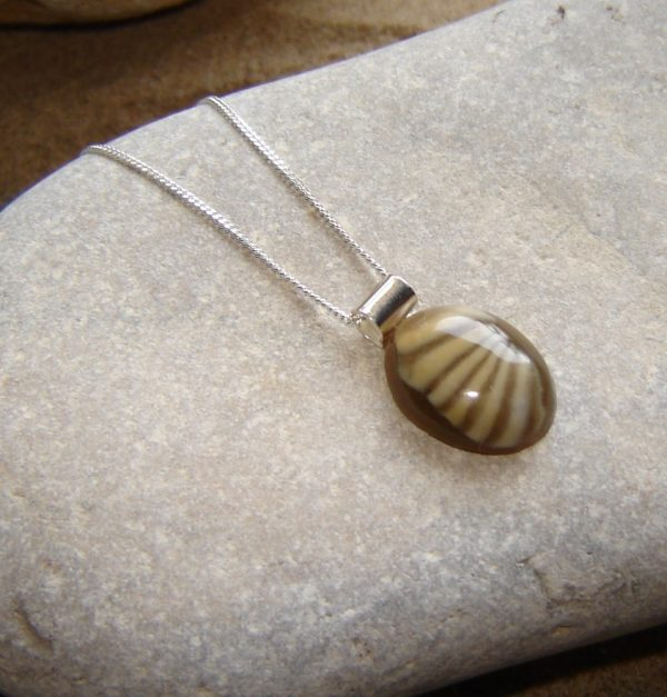English Trilobite Fossil Pendant in Sterling Silver. This Northumbrian fossil stone has been hand shaped and highly polished, then set on a sterling silver rolled tube bail.