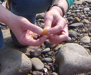 About Northumbria Gems Jewellery, original British stone and sea glass jewellery handmade in the North East of England. Image of Collecting stone for jewellery
