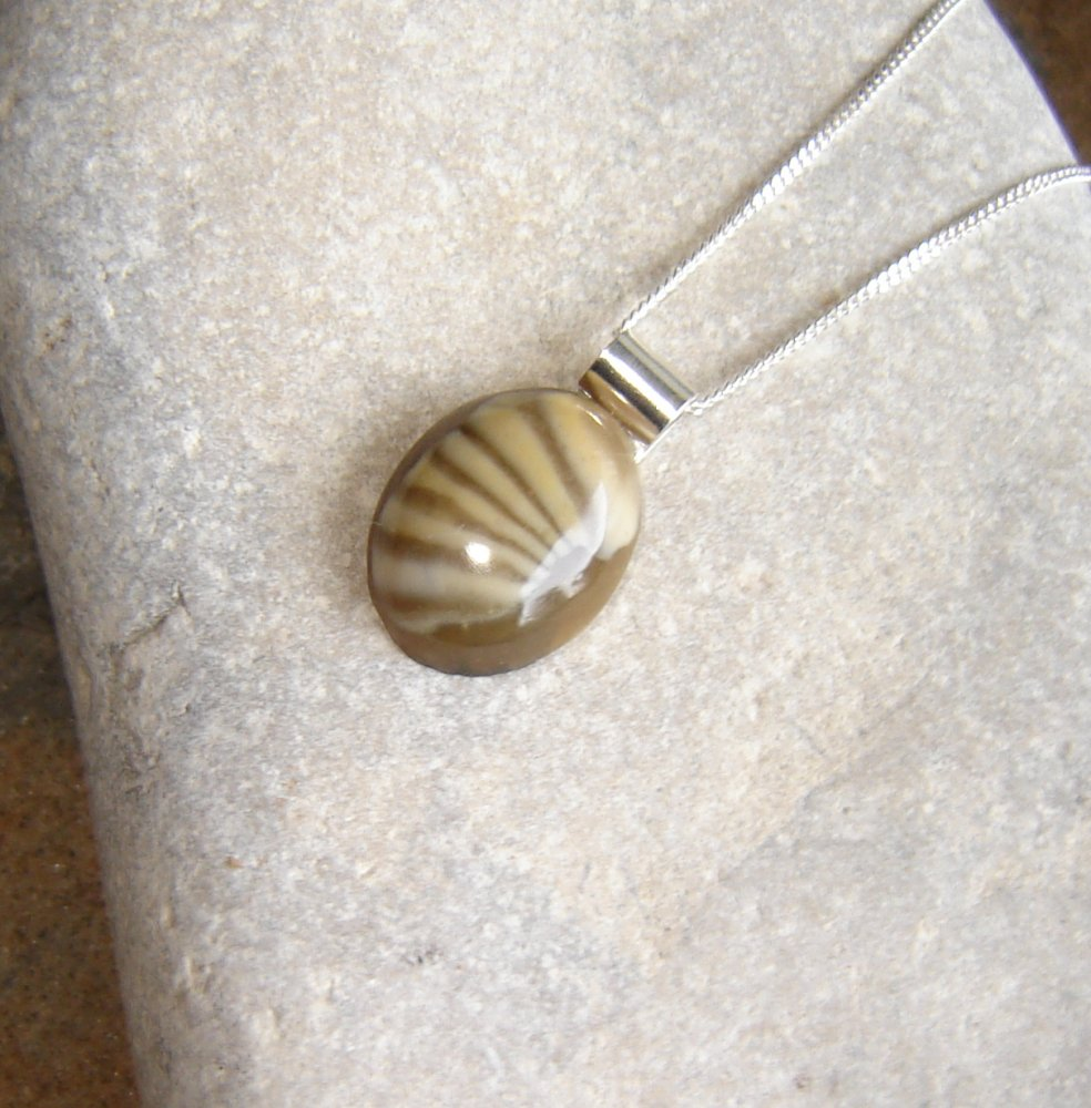 English trilobite fossil pendant northumbria gems english trilobite fossil pendant mozeypictures Image collections
